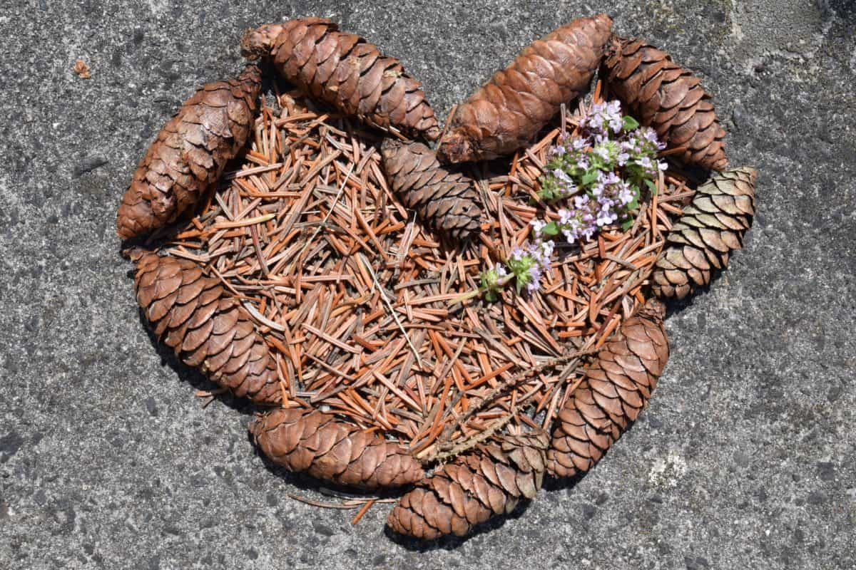 fir tree, heart, ground, art, fir cone, still life