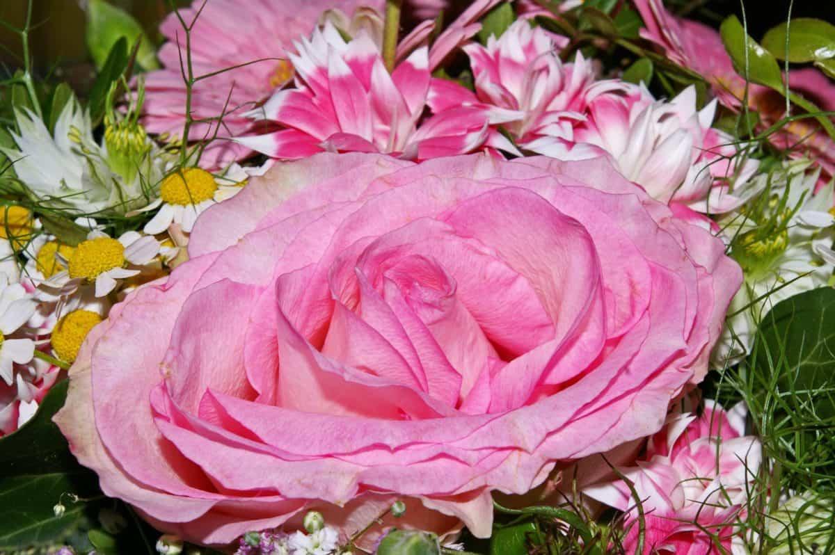 bouquet, nature, leaf, flower, horticulture, flora, garden, petal, rose, pink, plant