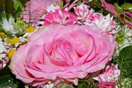 bouquet, nature, feuilles, fleurs, horticulture, flore, jardin, pétale, rose, rose, plante
