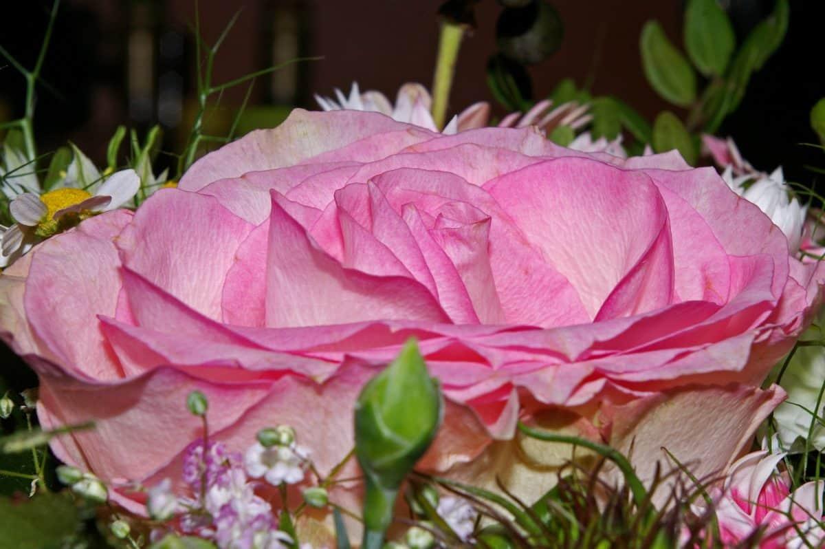 bouquet, fleur, feuille, jardin, nature, rose, pétale, rose, arrangement