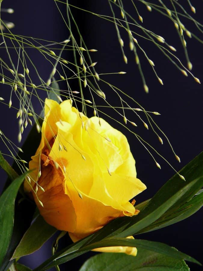 summer, green leaf, nature, flower, garden, flora, herb, vegetation, petal