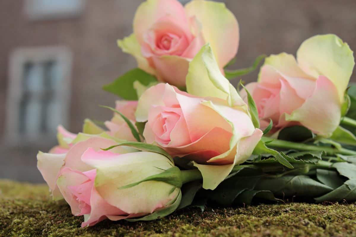 nature, flower, bouquet, petal, rose, arrangement, pink, plant
