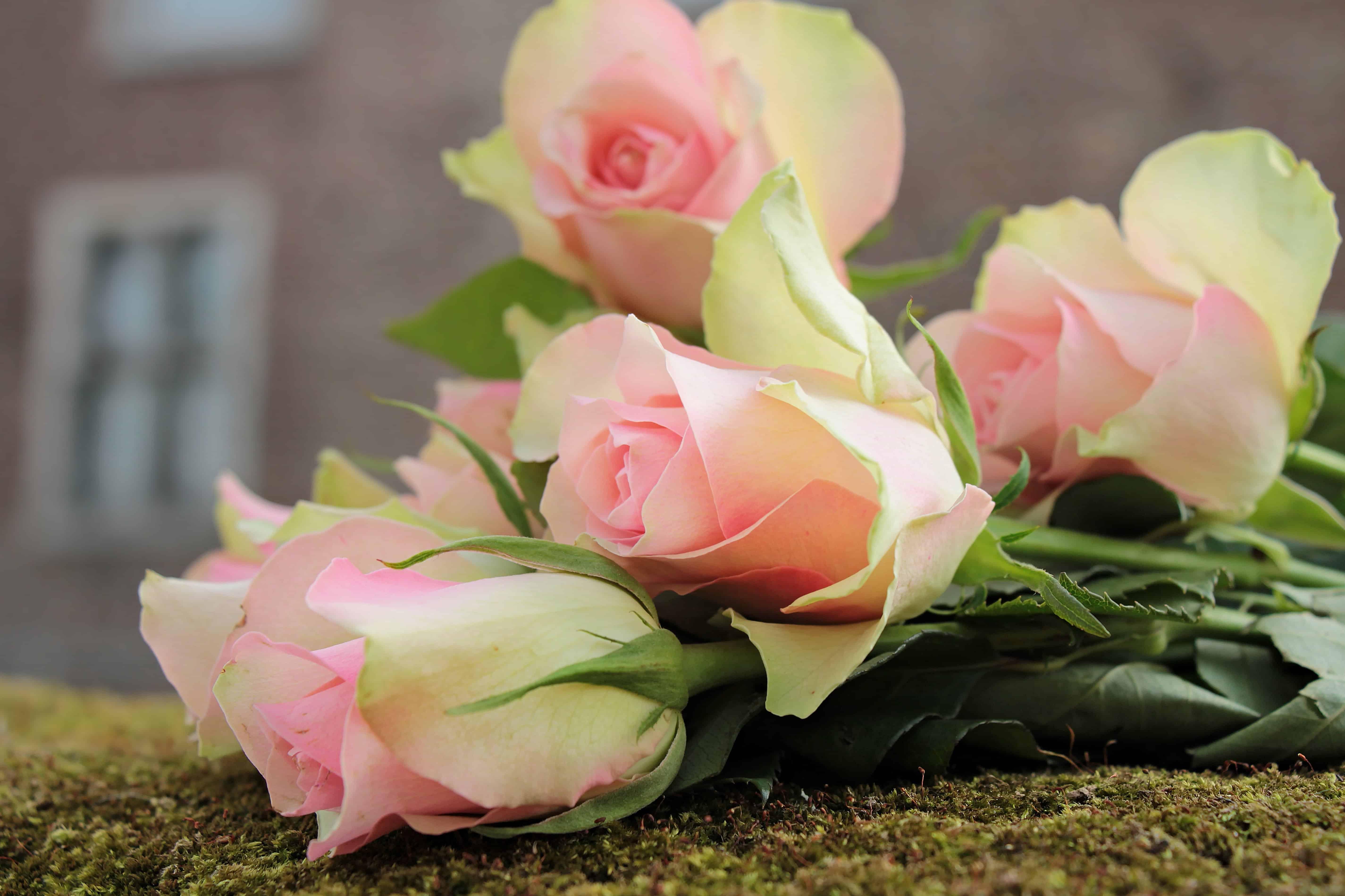 Free Picture Nature Flower Bouquet Petal Rose Arrangement
