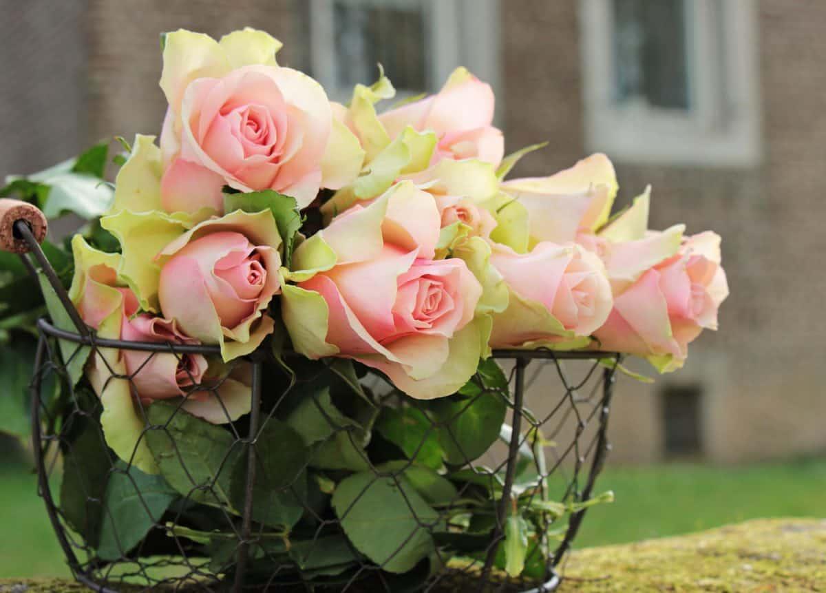 natura morta, bouquet, rose, estate, foglia, fiore, giardino, natura, arrangiamento