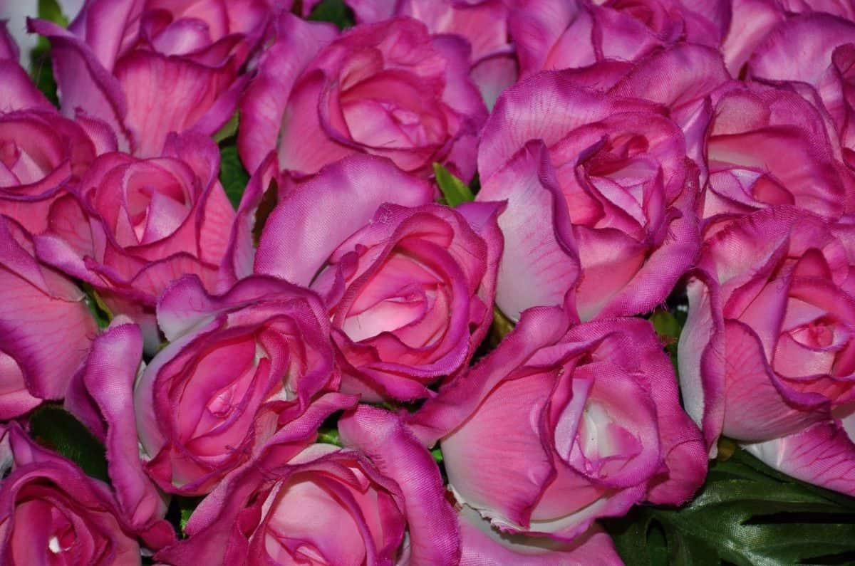 bouqet, nature, rose, red flower, flora, petal, horticulture, arrangement, pink, blossom