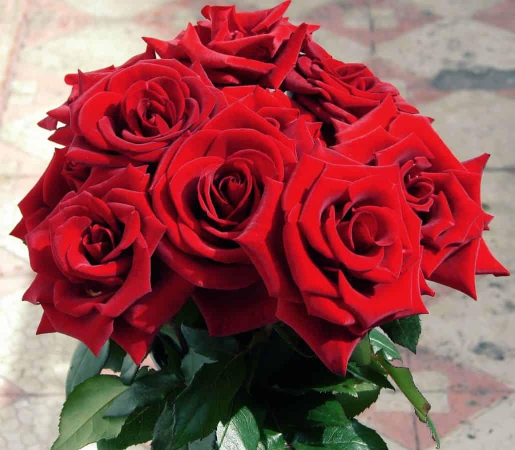 horticulturepetal, 玫瑰, 植物, 花束, 红花, 安排
