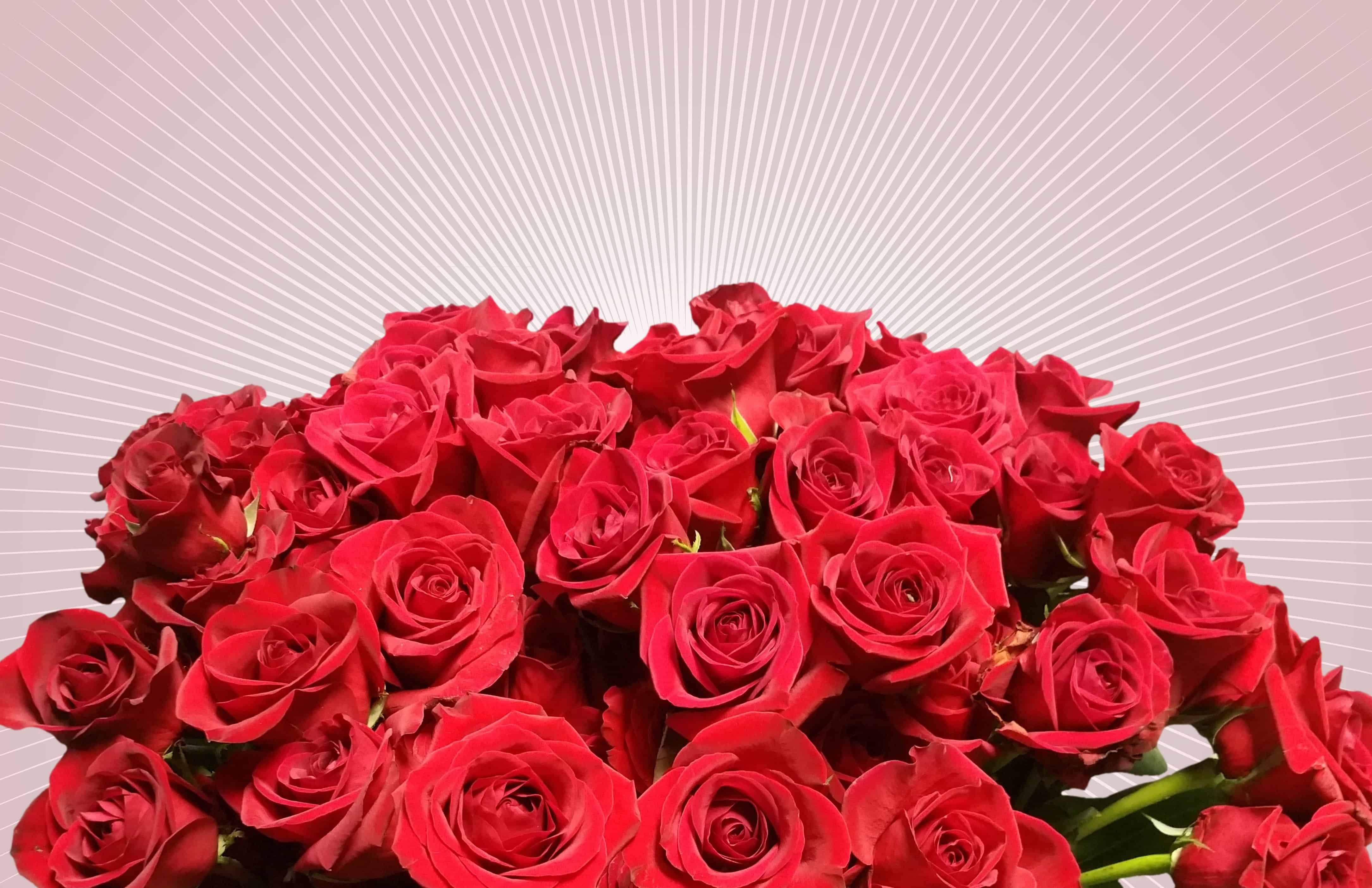 Free Picture Bouquet Red Flower Petal Rose Petals Blossom