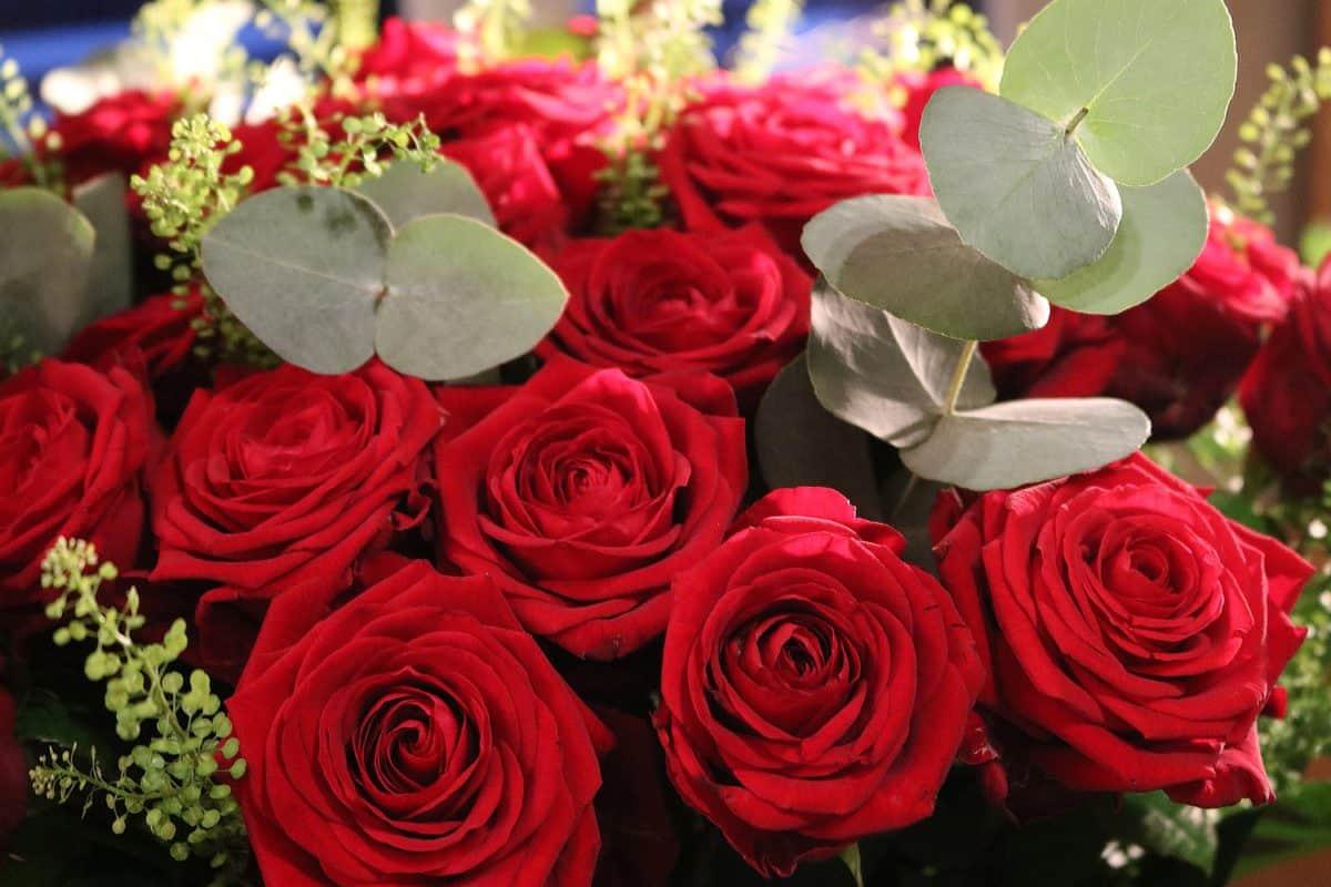 bouquet, rose, flower, petal, flora, arrangement, petals, blossom