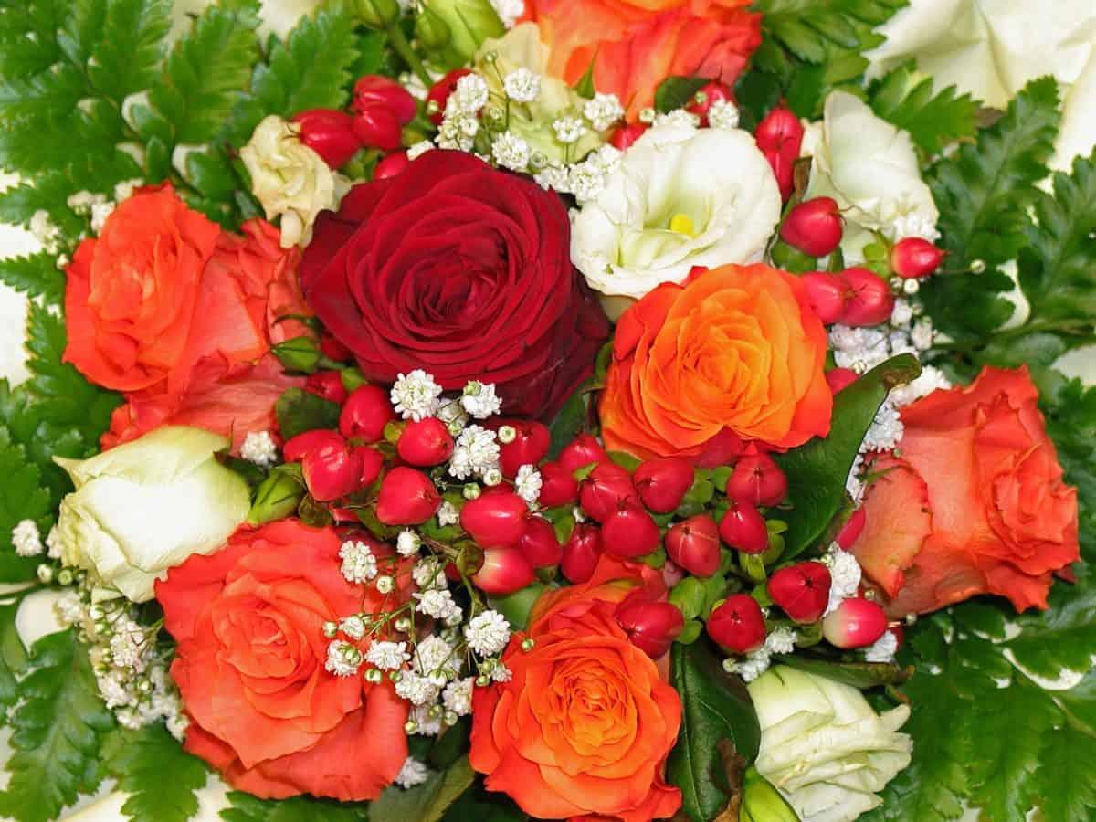 Arrangement, fleur, bouquet, pétale, rose, rose, fleur, plante