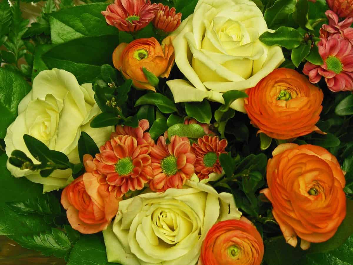 pétalos, ramo, rosa, arreglo, hoja, flor