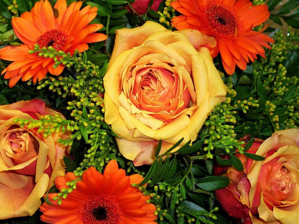 Blumenstrauß, bunte, Gartenbau, Rose, Natur, Flora, Braut, Blume, Anordnung