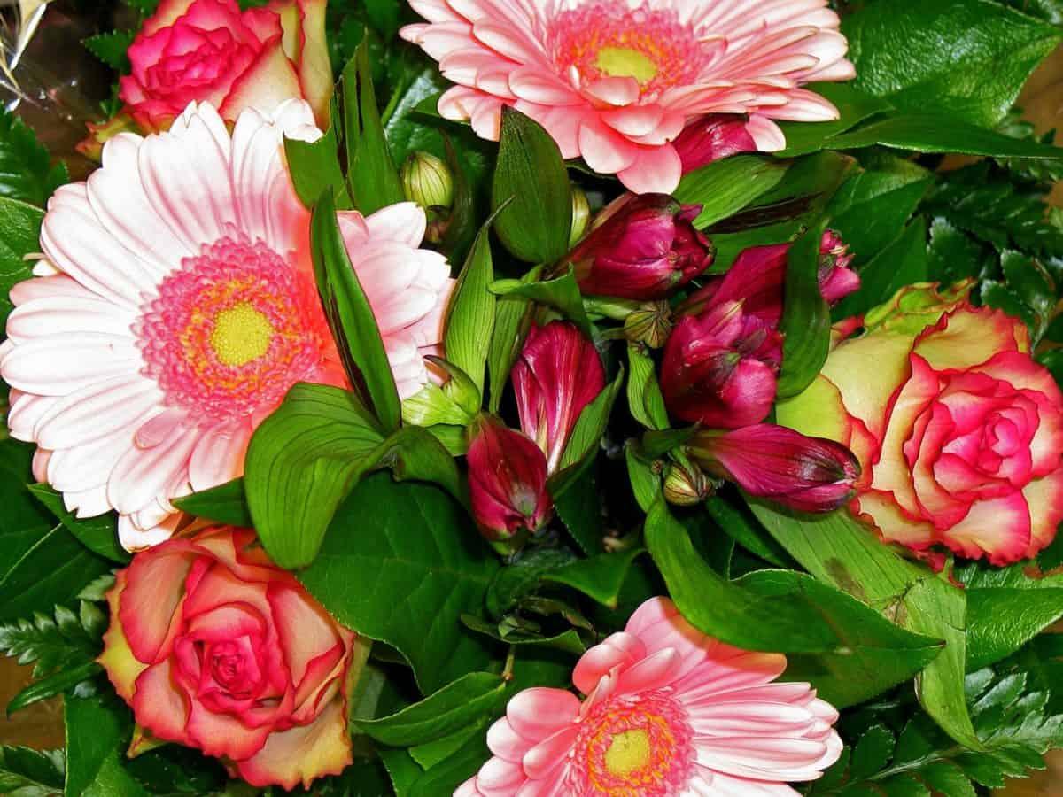 nature, bouquet, feuille verte, été, jardin, flore, fleur, pétale, rose