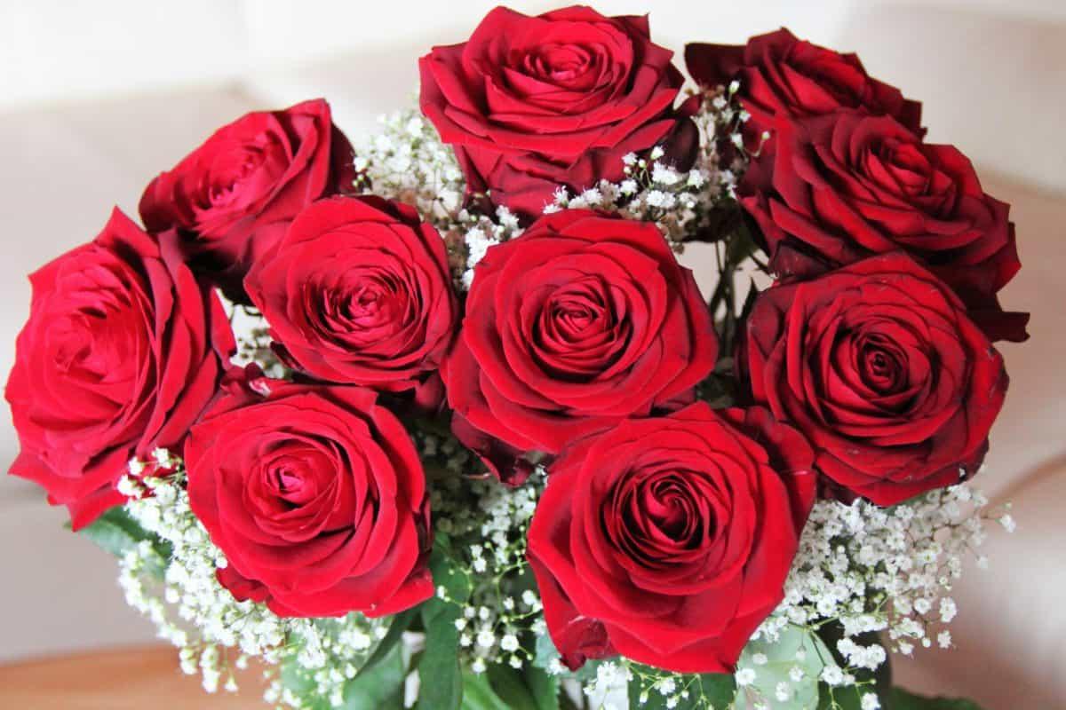 Rose, bouquet, pétale, fleur, arrangement, fleur, plante, rouge