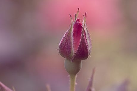 wild flower, macro, outdoor, nature, flower bud, plant