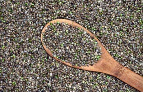 nature, nourriture, texture sèche, sol, extérieur, semence, cuillère