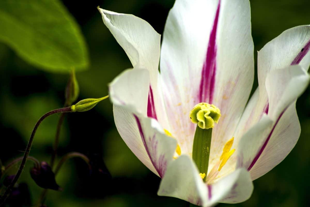 levél, természet, virág, nyáron, növény, kert, növény, virág