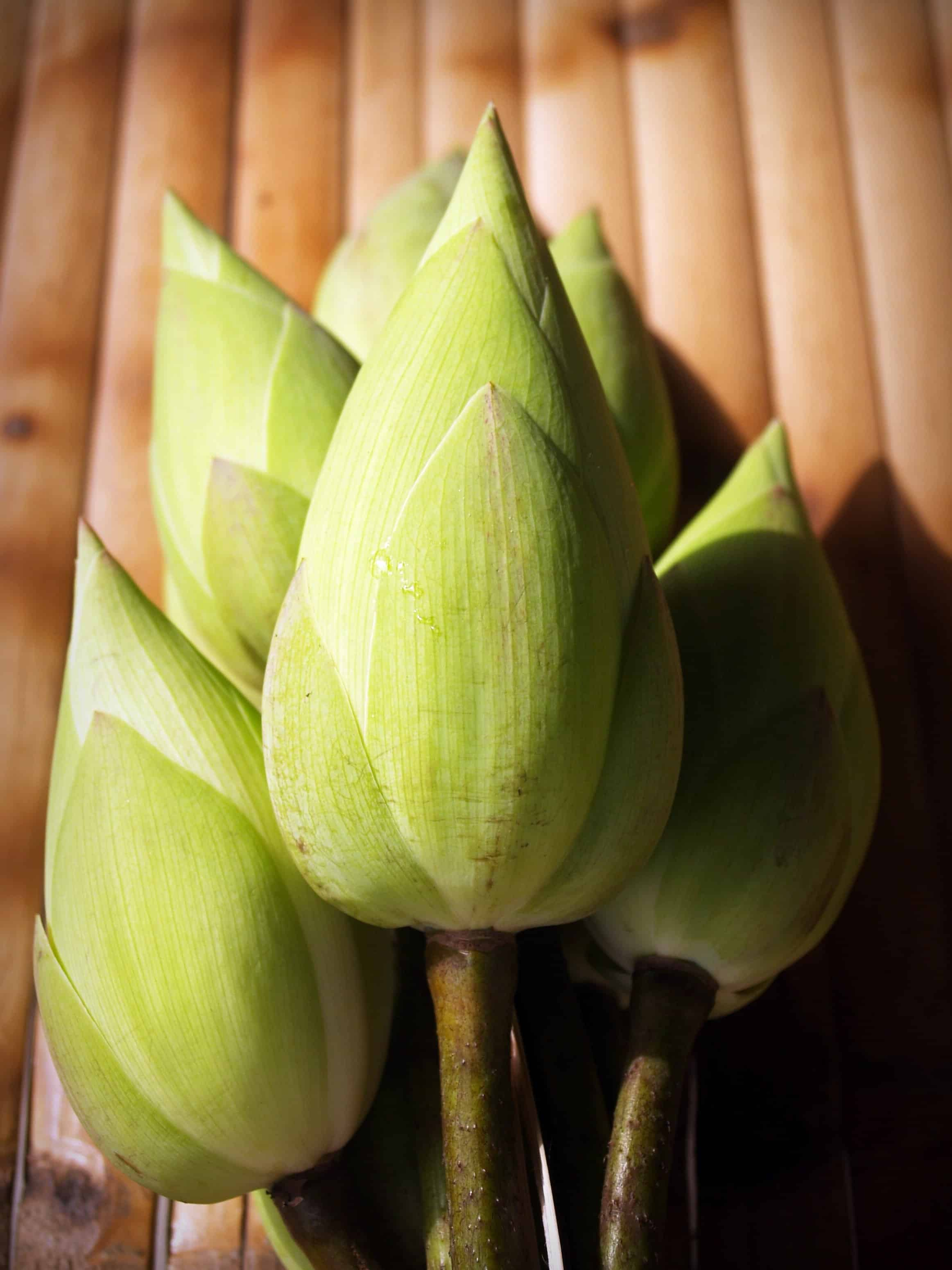 Free picture leaf nature flower plant food waterlily leaf nature flower plant food waterlily izmirmasajfo