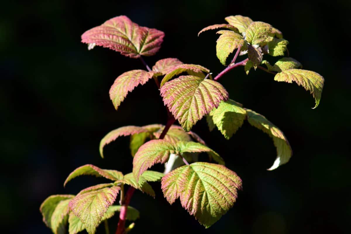 shrub, green leaf, flora, nature, plant, herb, branch, darkness