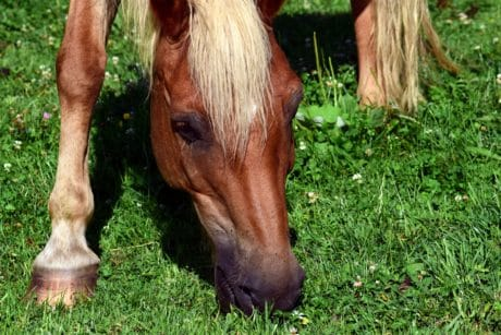 nature, herbe, chevaux, ranch, brun