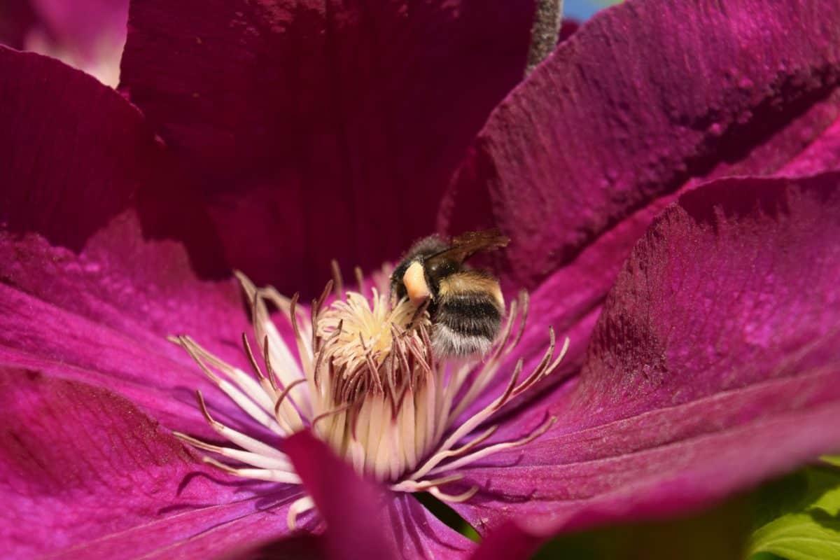 flower, flora, nature, garden, macro, summer, plant, herb, pink