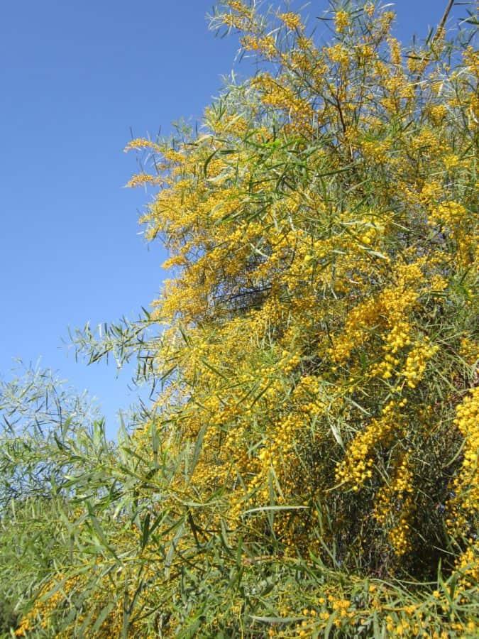 nature, flore, paysage, été, feuille, arbre, branche, environnement