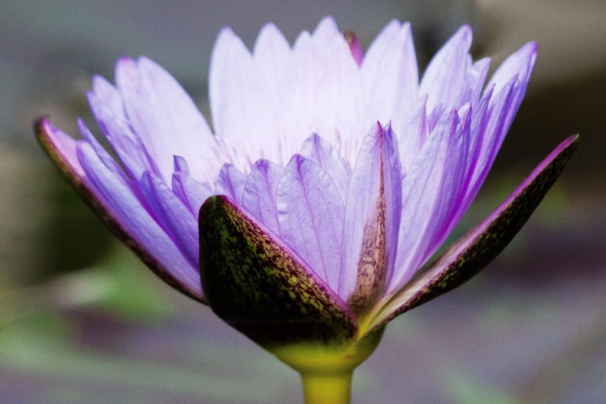 flora, jardín, verano, hoja, flor, naturaleza, plantas, horticultura