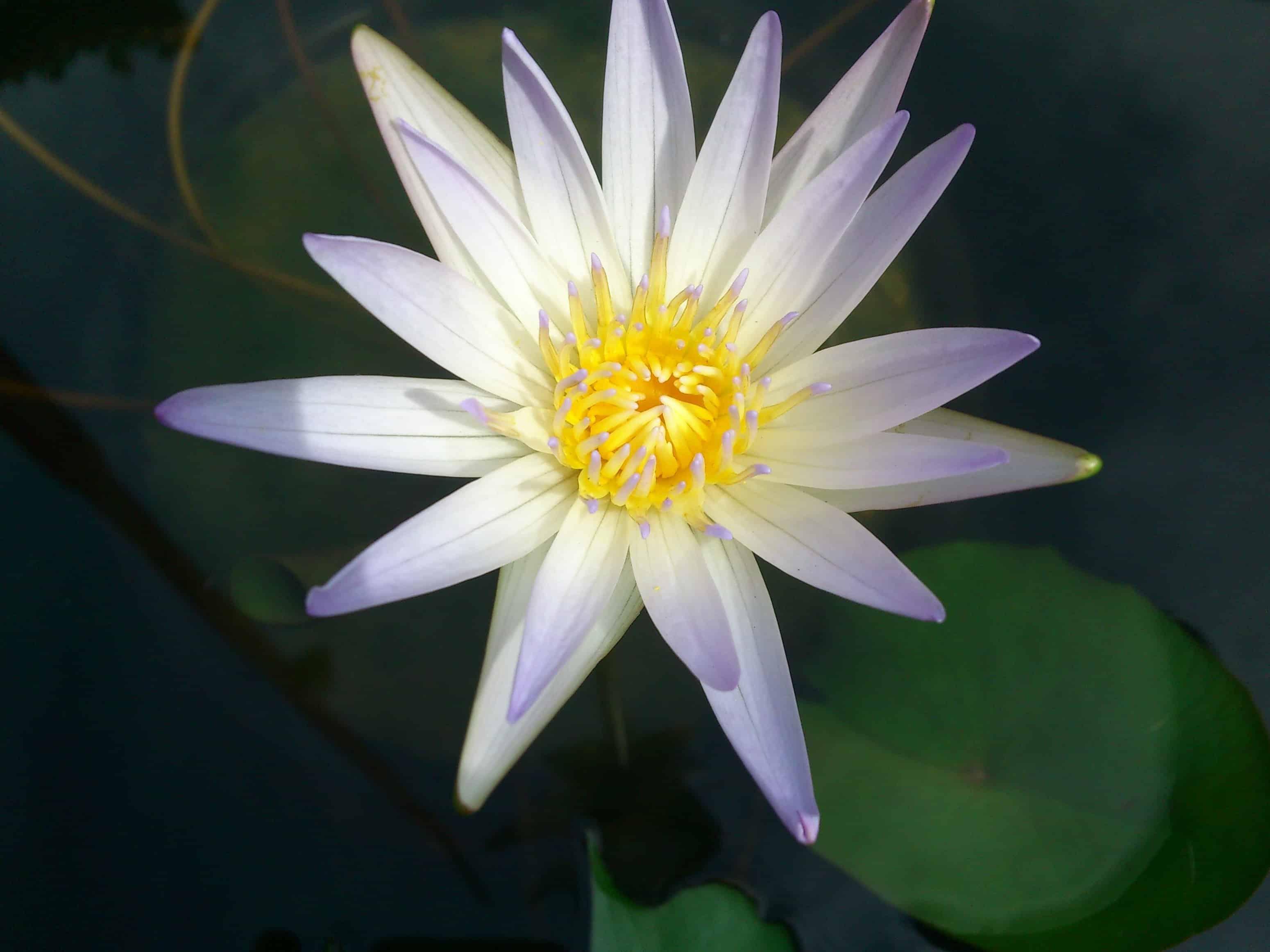 plante verte avec fleur blanche