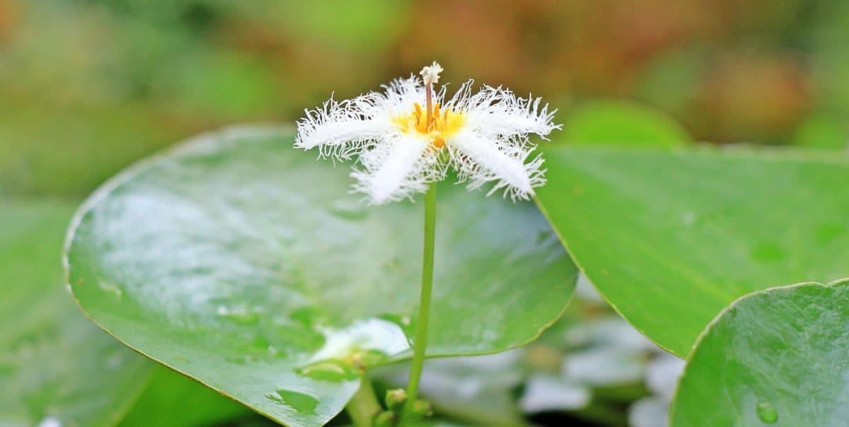 Flora, Natur, Blatt, Pflanze, weiße Blume, Gartenbau, Blüte, Garten