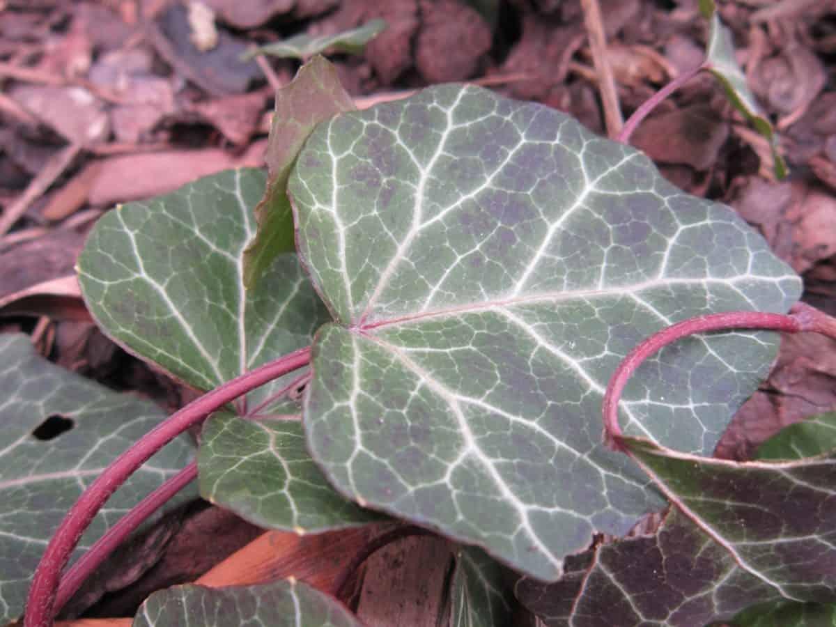 Blatt, Natur, Flora, Kraut, Pflanze, Boden, Kraut