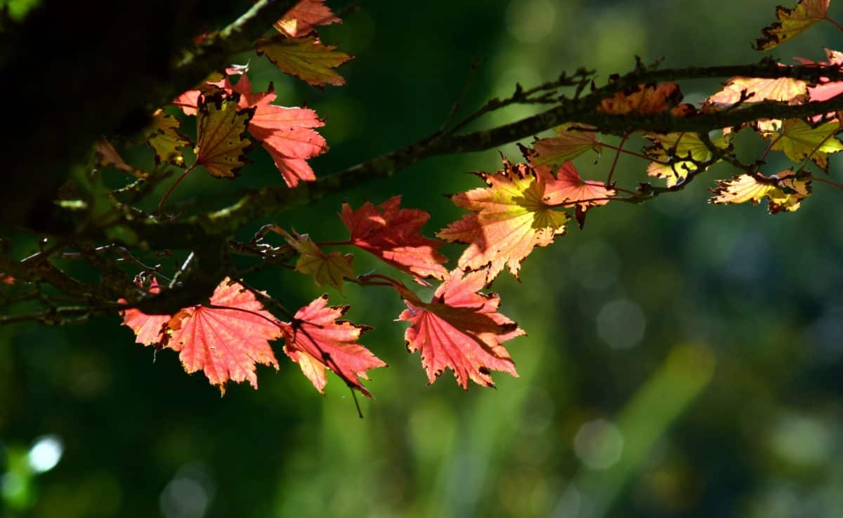 flora, leaf, flower, nature, tree, plant, autumn