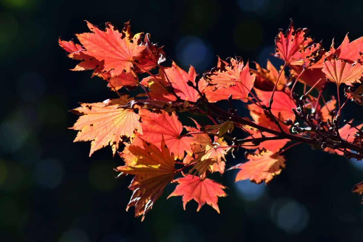 foglia, flora, natura, autunno, alberi, fogliame, foresta