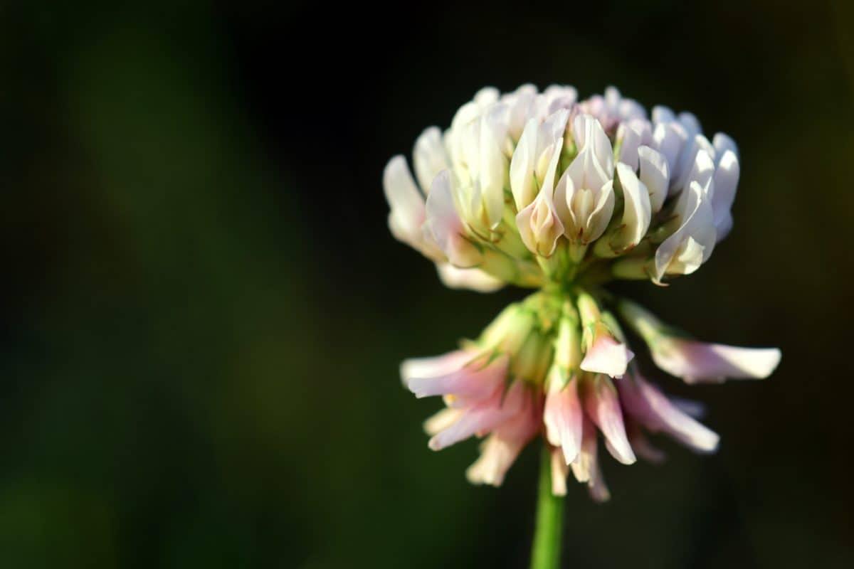 Sommer, Natur, Garten, Flora, Wildblumen, Pflanze, Blüte, Blüte