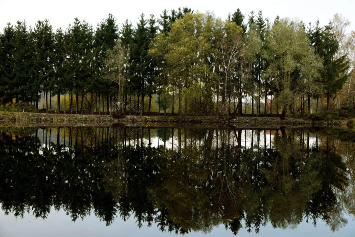 paesaggio, riflesso, albero, lago, natura, acqua, natura