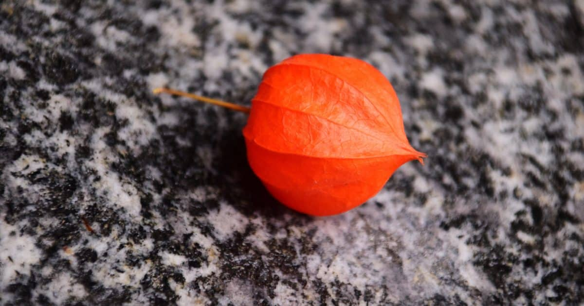 red, nature, colorful, ground, autumn, flora, plant
