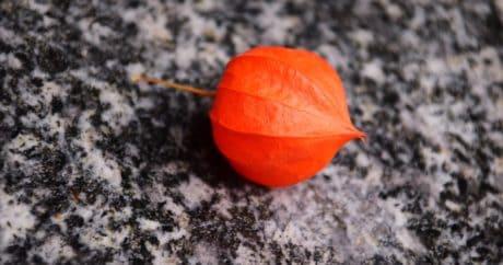 червоний, природи, барвисті, землі, осінь, флора, завод