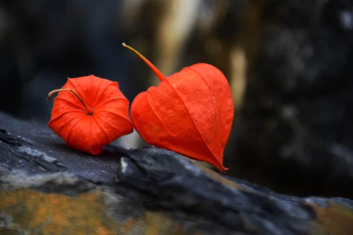 naturen, höst, färgrikt, flora, växt