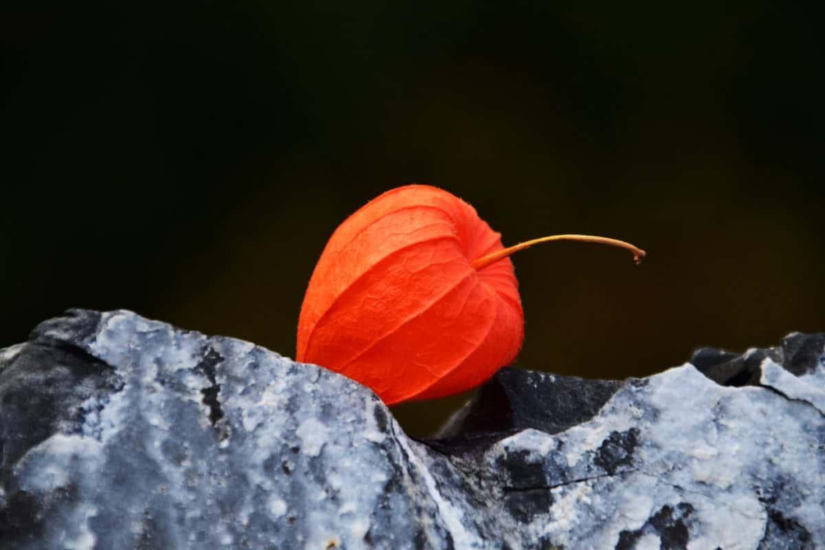 nature, autumn, flora, plant, colorful