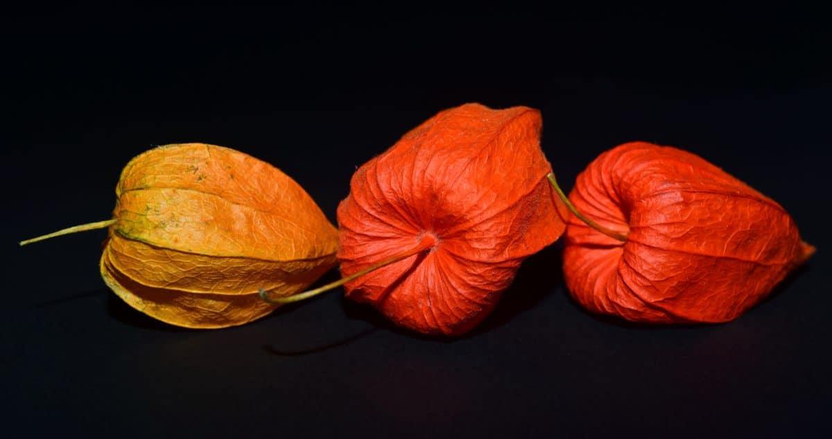 nature, plantes, flore colorée, automne,