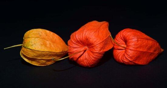 nature, plant, colorful, autumn, flora