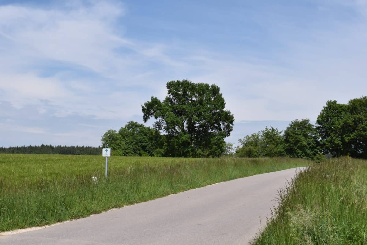 landscape, nature, road, field, tree, countryside, ble sky, green grass