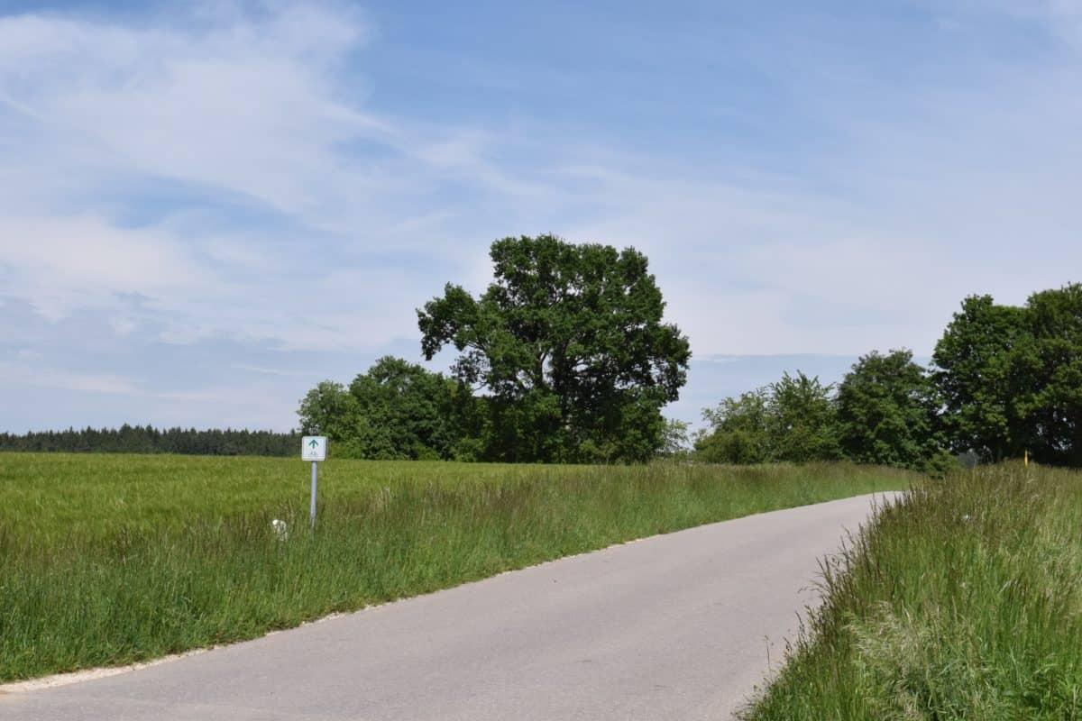 paisaje, naturaleza, camino, campo, árbol, campo, cielo de ble, hierba verde