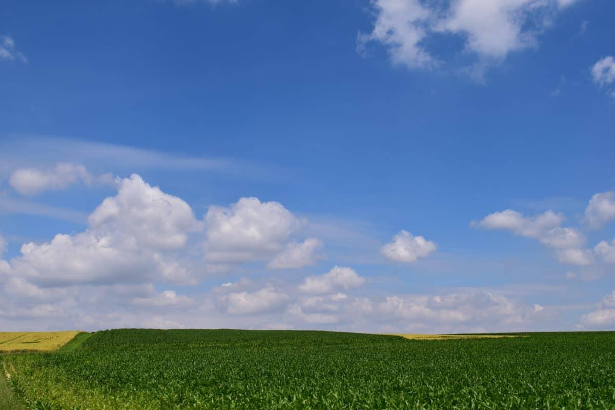 nature, field, blue sky, landscape, grass, bean, meadow