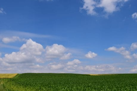 nature, field, blue sky, landscape, grass, bean, meadow