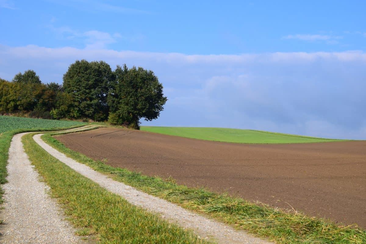 cielo blu, campagna, natura, paesaggio, strada, campo, erba verde, prato