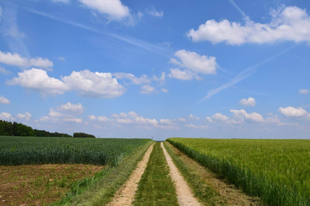 landscape, road, summer, field, nature, sky, countryside, agriculture