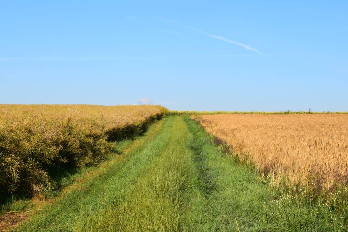 Road, fält, natur, jordbruk, sky, landskap, landsbygden, gräs