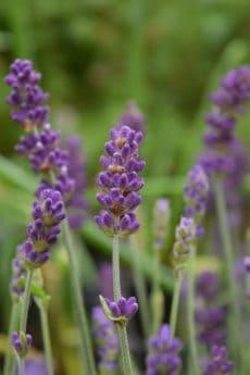 Wiese, Wildblumen, Garten, Pflanzen, Sommer, Natur, Pflanze, Kraut