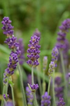 Prato, wildflower, giardino, flora, estate, natura, pianta, erba