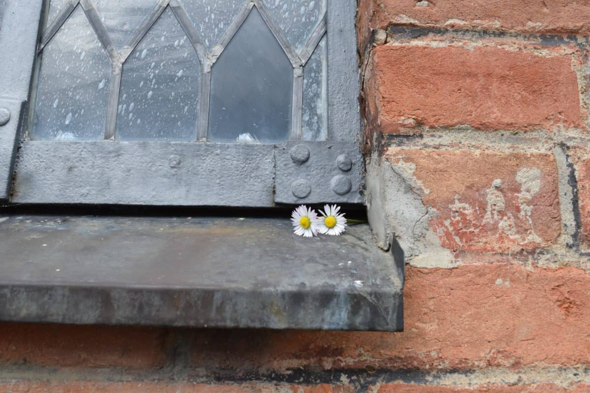 flower, wall, brick, texture, architecture, old, window