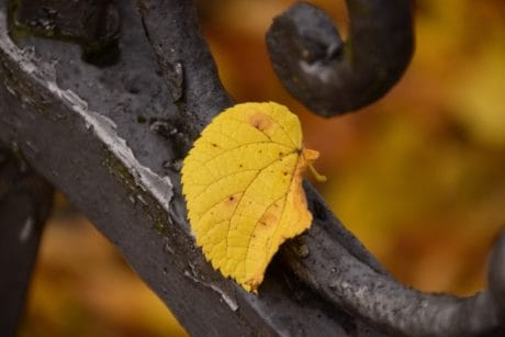 wood, leaf, nature, metal, wrought, fence, tree, plant, autumn
